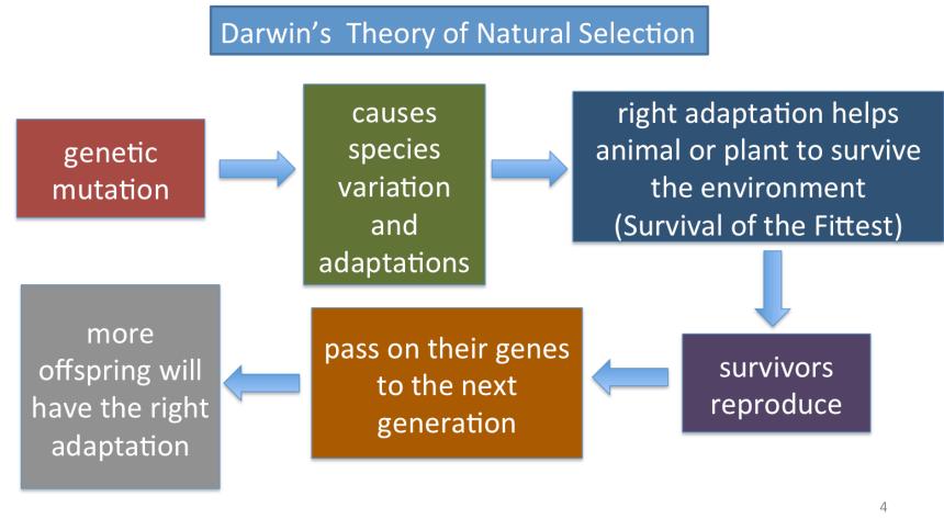 Evolution flowchart