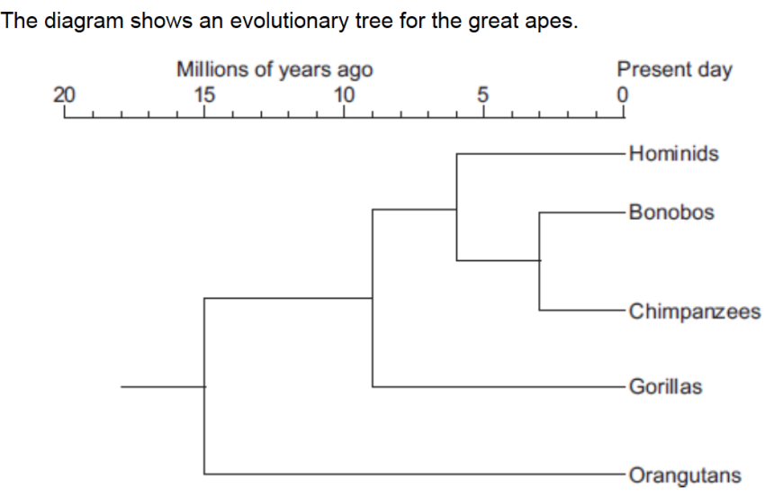 Evolution_B1_8_practice_questions_and_answers_pdf
