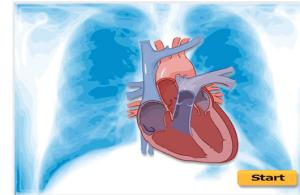 Label_the_heart___Sciencelearn_Hub