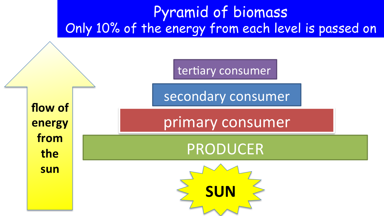 B15 Energy And Biomass In Food Chains Secondary Science 4 All
